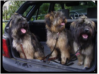 gos in de auto